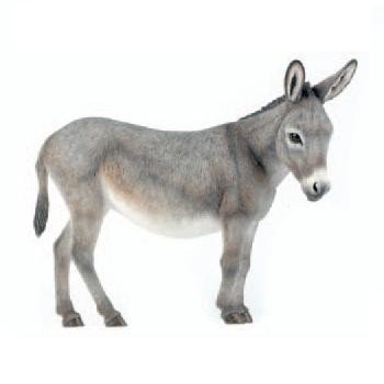 Female donkey grey