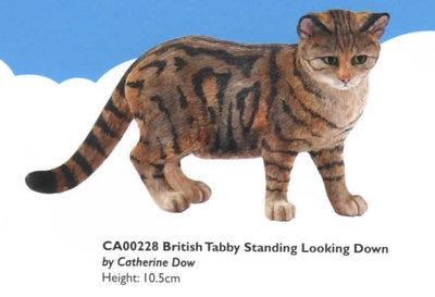 British Tabby Standing