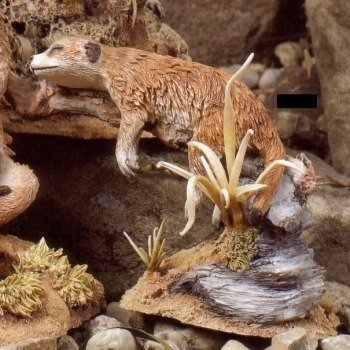 Katnap - Meerkat
