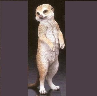 Meerkat Baby Standing