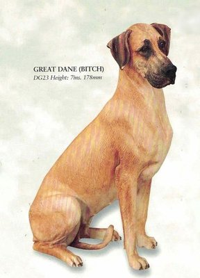 Great Dane (Bitch)