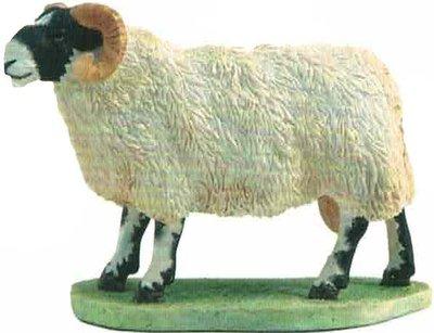 Blackfaced Ram