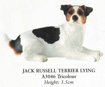 Jack Russell Terrier Lying
