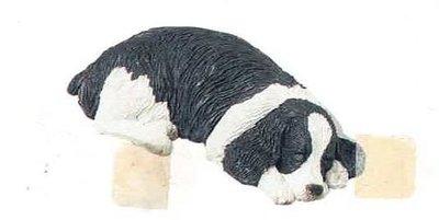 Springer Spaniel black / white