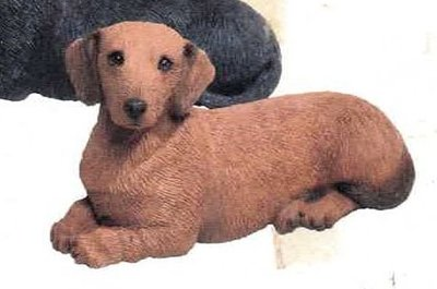Dachshund smooth Red