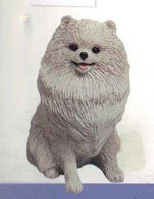 Pomeranian Cream