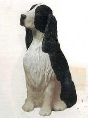 Springer Spaniel black white