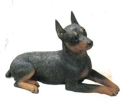 Miniature pinscher, blk