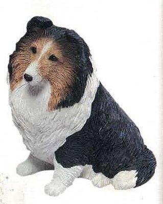 Shetland sheepdog, Tri
