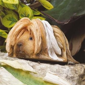 Cavia Long haired