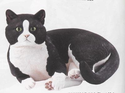 British cat lying
