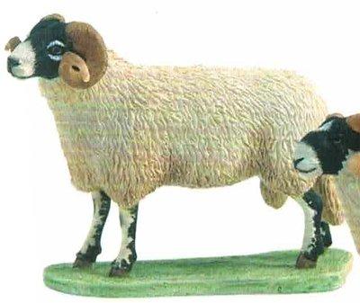Swaledale Ram