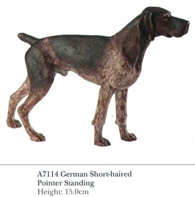 German Short-haired Pointer Standing