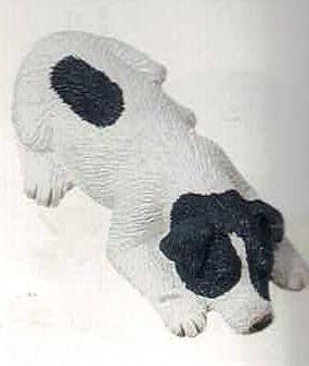 Jack Russel Terrier Rough white/black