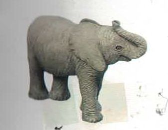 Elephant African (Calf)