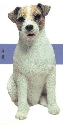 Jack Russel Terrier Rough white / braun