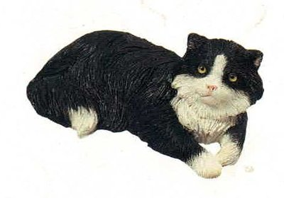 Cat black white Laying