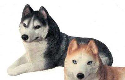 Husky, BLK (Brn Eyes)