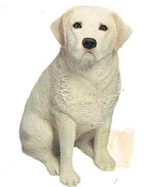 Labrador Retriever Yel (Sitting)