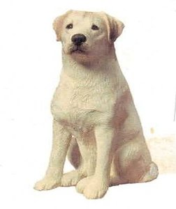Labrador Retriever Yellow