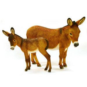 Female donkey