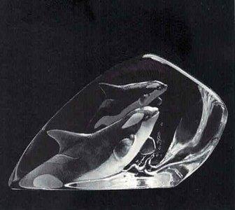Killer Whale - Mats Jonasson
