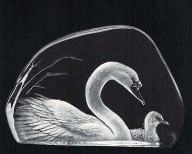 Swan & Young