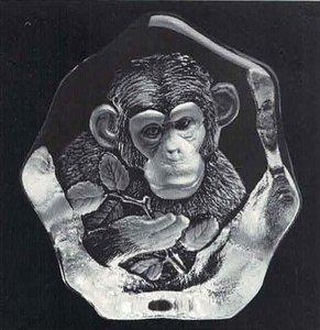 Chimpanzee - Mats Jonasson