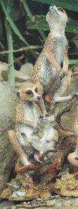 Attentive Meerkats
