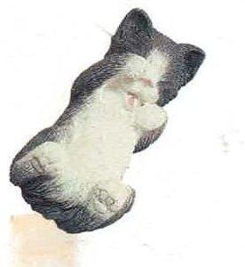 Kitten Black White Yawner