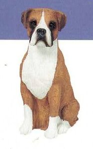 Boxer Fawn UC