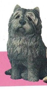 Cairnterrier Black