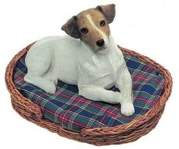 Jack Russel Terrier, Smooth, wiht/brn zonder mand