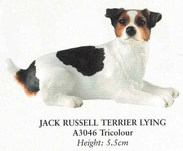 jack russell terrier lying