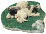 Pug, Fawn (pups)